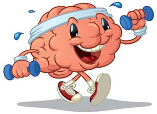 muschii-creierului
