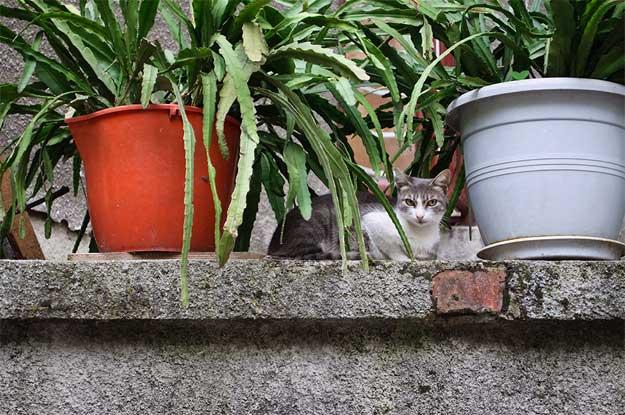 Pisicile-Poetice-3