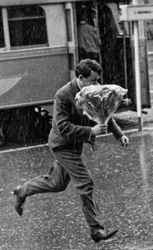 Tomislav Peternek - Flori în ploaie