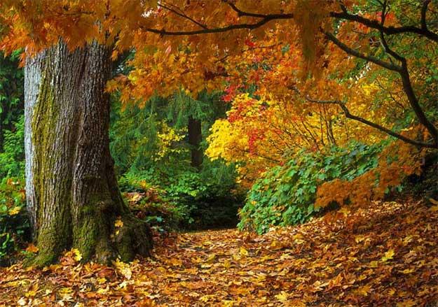 Nostalgii-autumnale