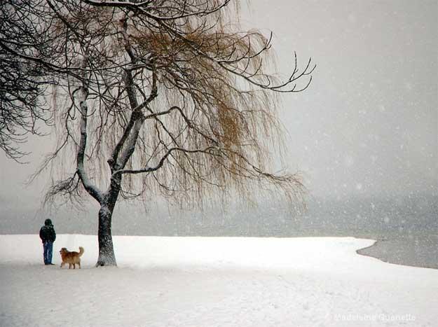 albul-zapezii