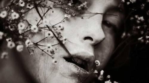 Floarea iertarii