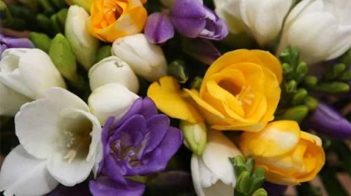 Florile bucuriei