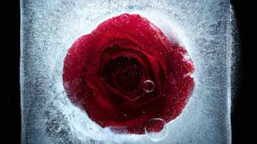 Trandafirilor