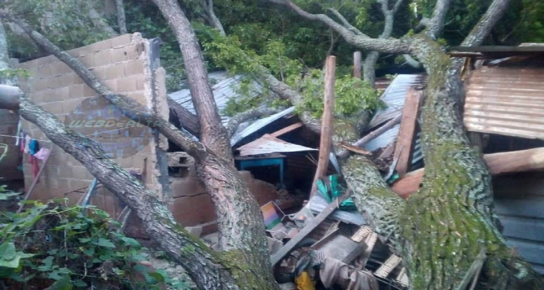 Resultaron ilesos: árbol cayó sobre vivienda en La Playera