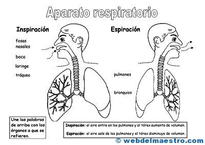 Aparato respiratorio para niños
