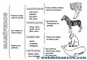 Animales vertebrados mamíferos