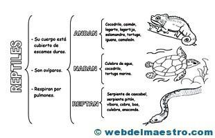 Animales vertebrados reptiles