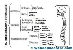 Sistema locmotor clasificación 1