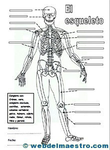 Sistema locomotor esqueleto