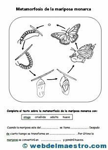 Animales invertebrados Metamorfosis