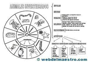 Animales invertebrados clasificación-4