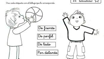 Lateralidad Web Del Maestro