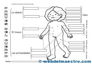 El cuerpo humano- Actividades