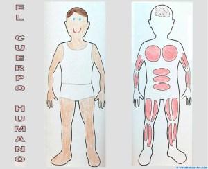 El cuerpo humano para niños (por dentro)