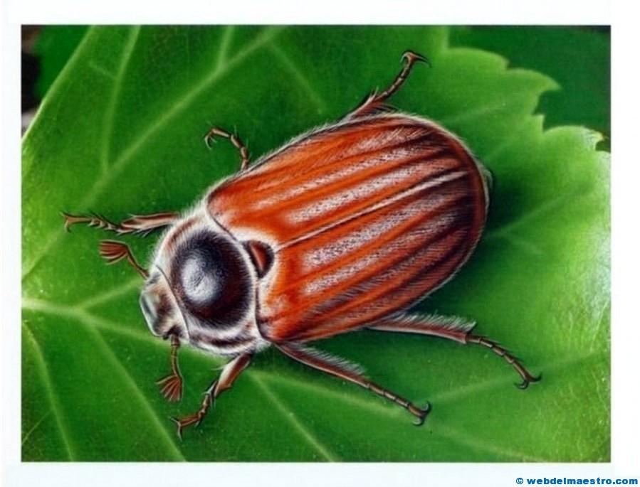 Dibujos En 3d Para Niños Web Del: Dibujos De Insectos