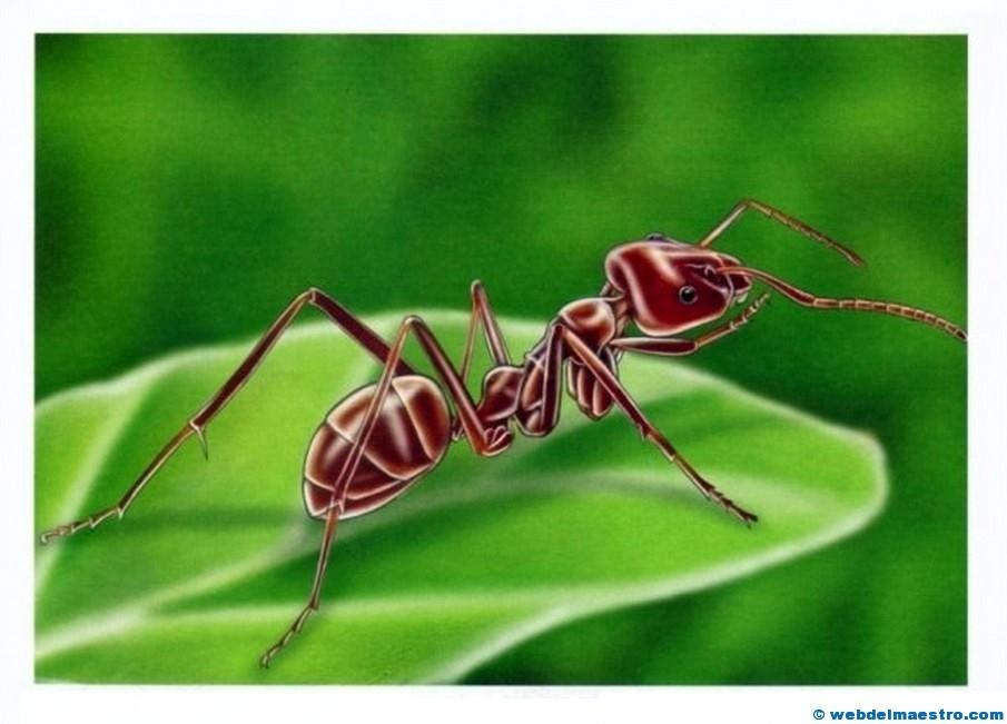 Dibujos de insectos - Web del maestro