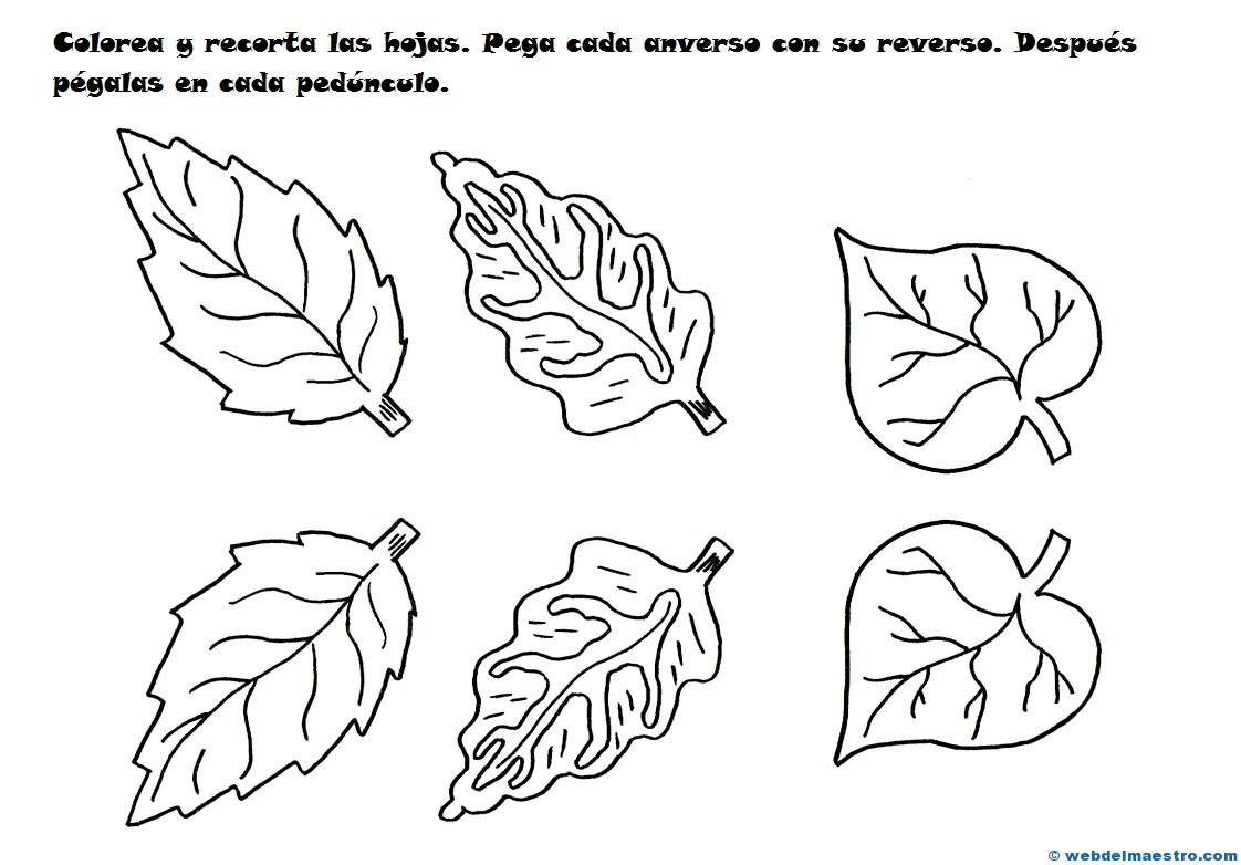 Hojas para flores de papel - Web del maestro