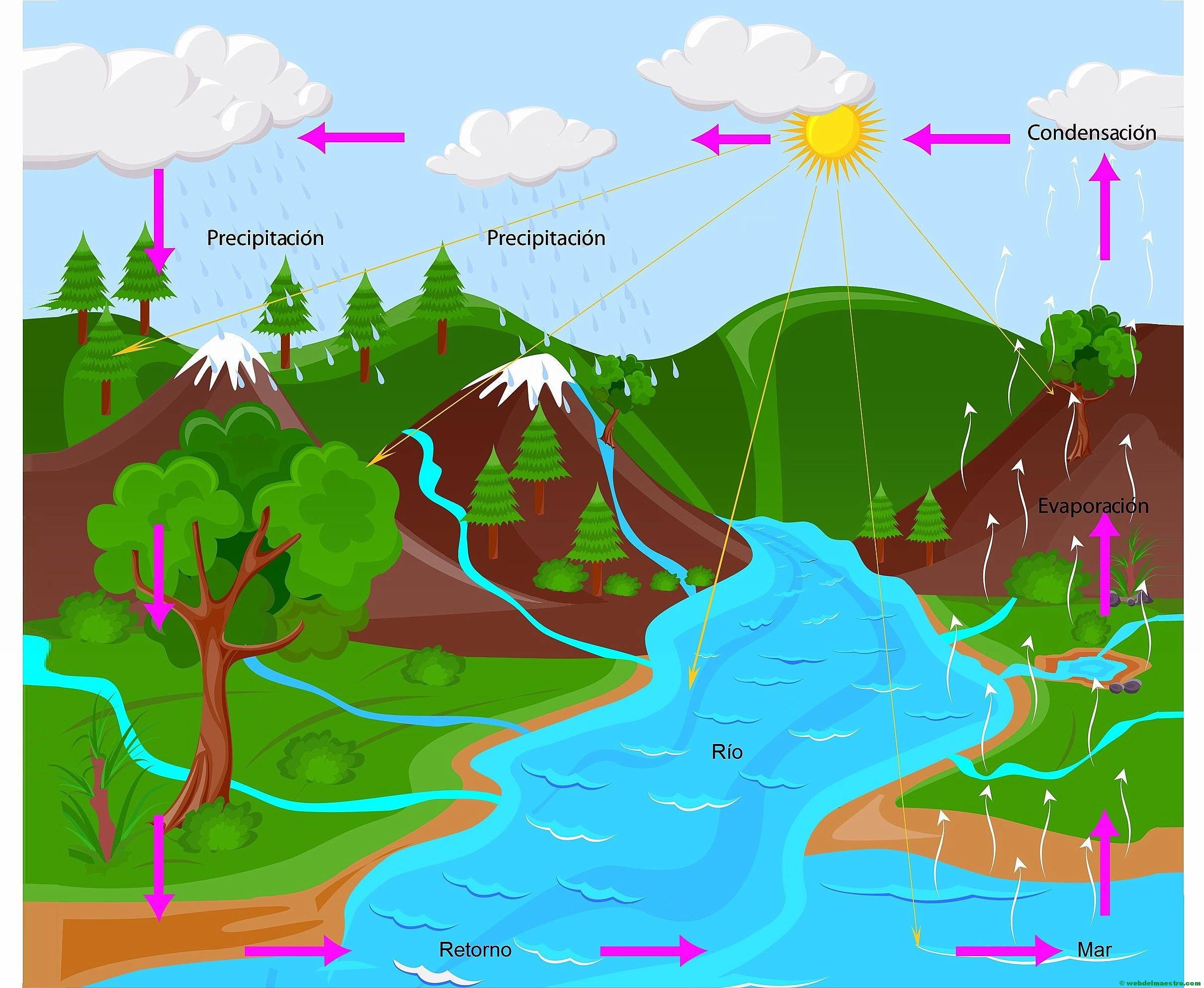 El ciclo del agua (Primaria) - Web del maestro
