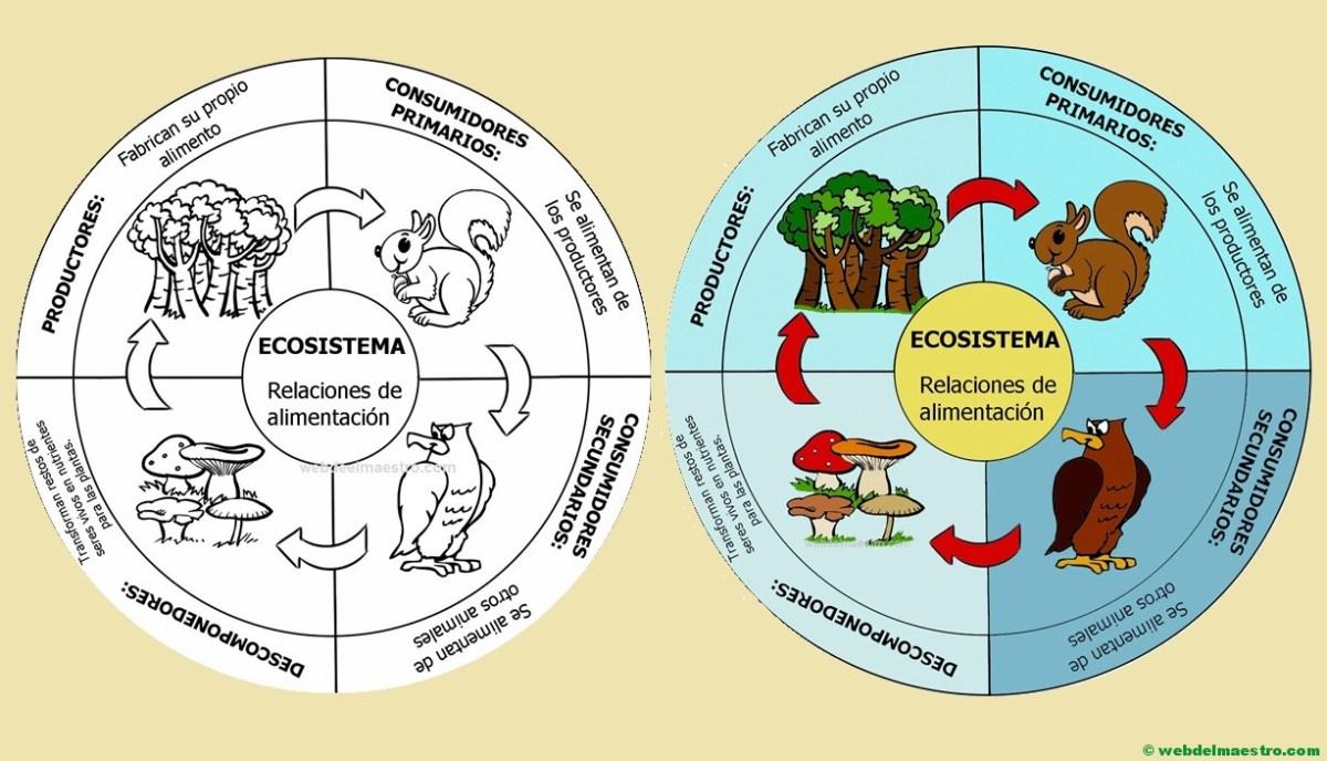 Ecosistema | Cadena alimenticia