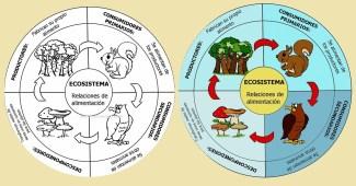 Ecosistema-cadena alimenticia-