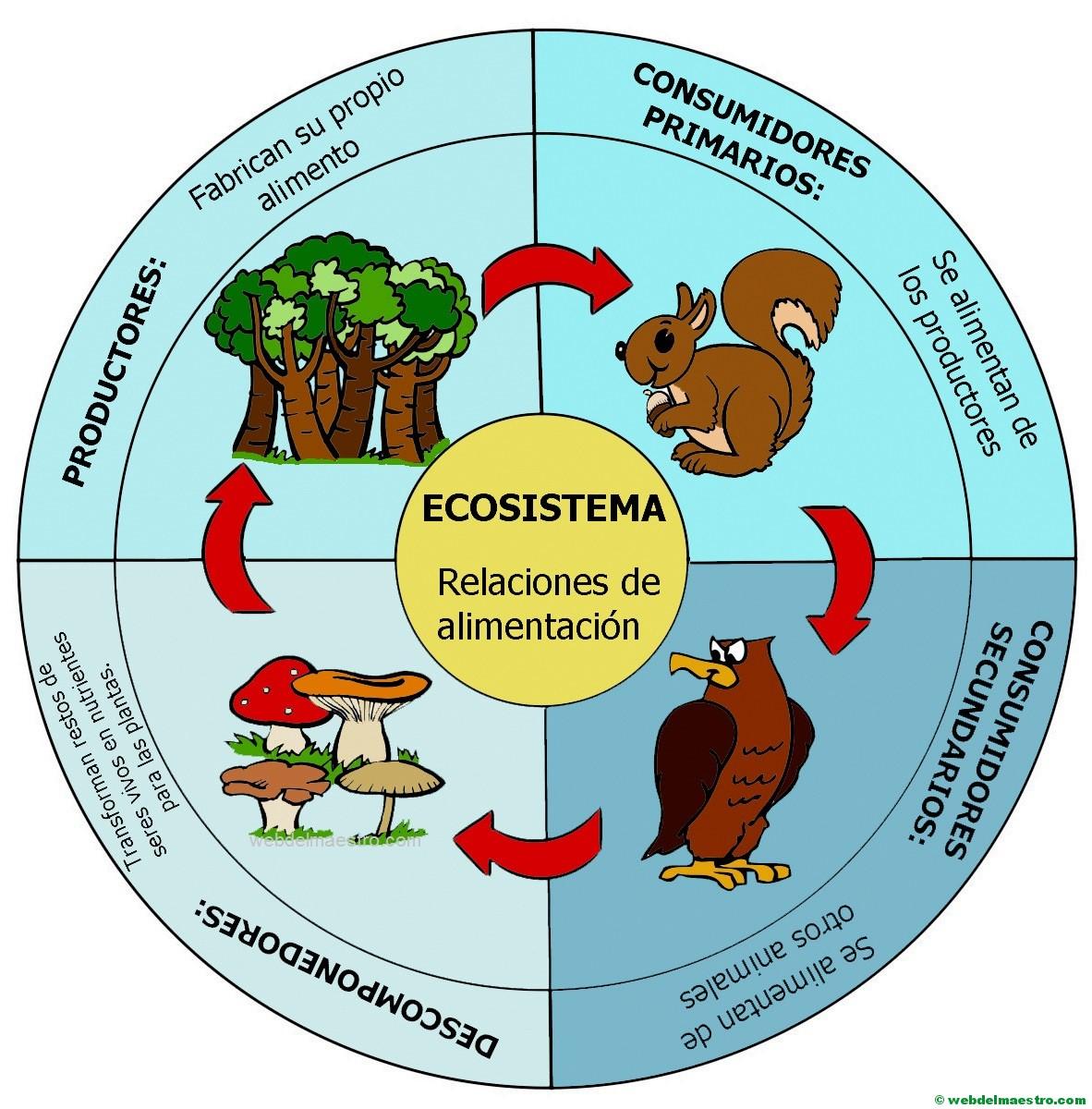Ecosistema Cadena Alimenticia Web Del Maestro
