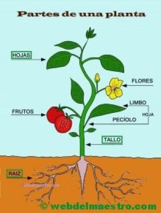 Partes de una planta-CARTEL-