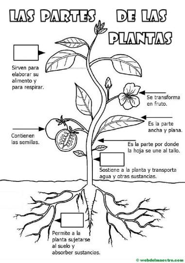 Partes de una planta para ni os de primaria web del maestro for Estudiar jardineria