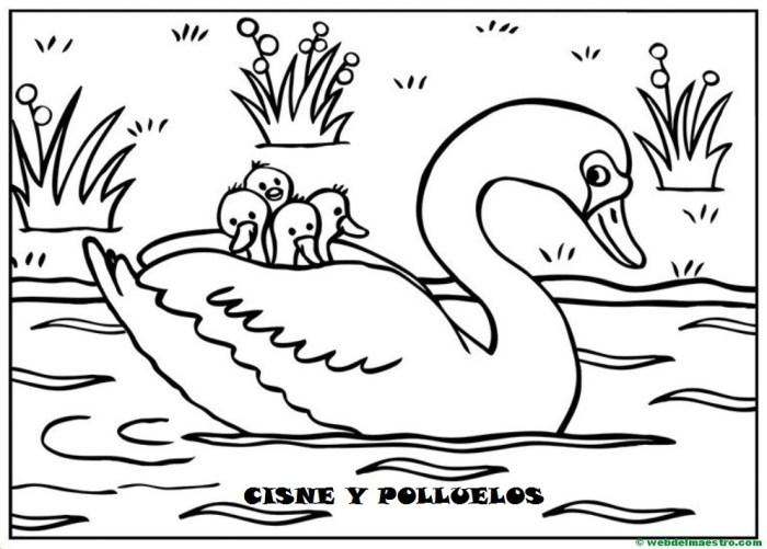 cisne y polluelos