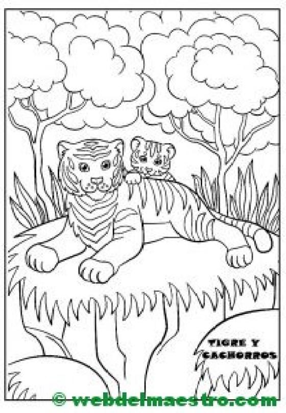 tigre y cachorros