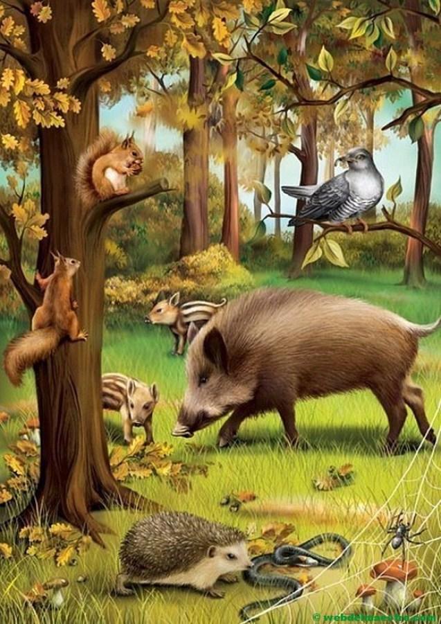 Animales del bosque-Europa-1