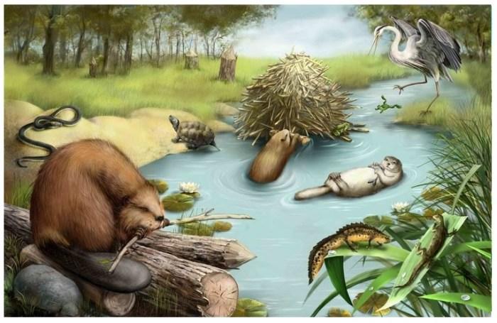 Animales del bosque-ríos