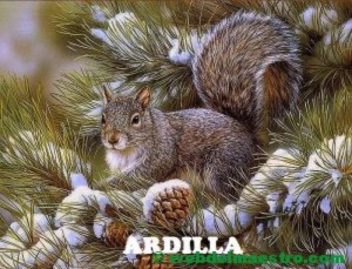 ardilla
