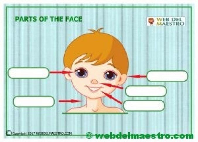 Partes del cuerpo en ingles-la cara-ejercicios