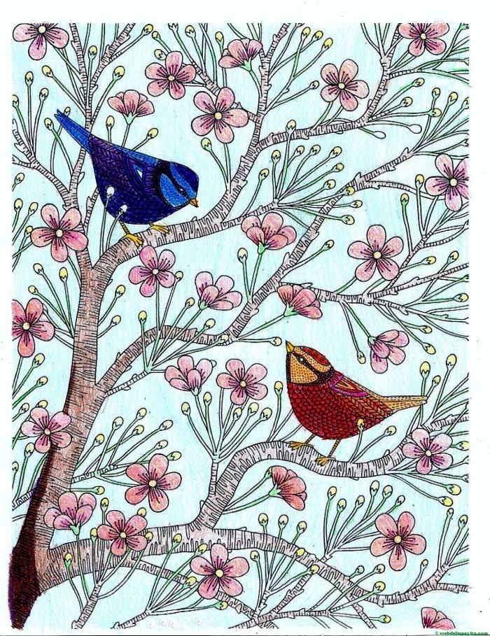 Pájaros-Terminación color
