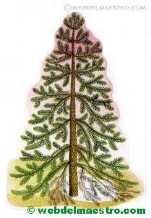 árboles y arbustos-2