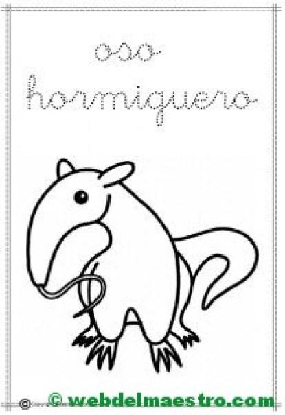 11-oso hormiguero
