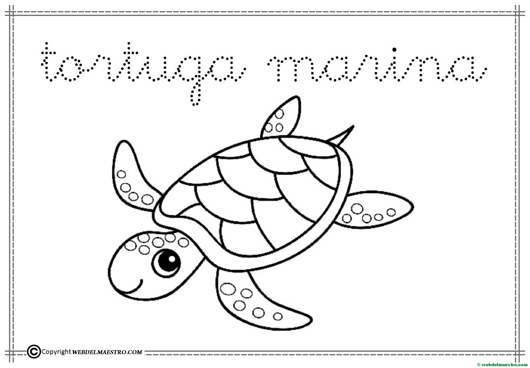 5 Tortuga Marina Web Del Maestro