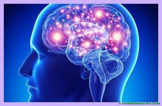 el cerebro separa los impulsos y los interpreta