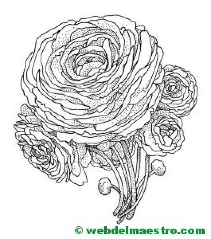 dibujo de rosa para colorear-2