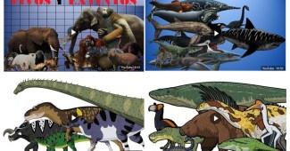 Comparación de los animales por tamaños