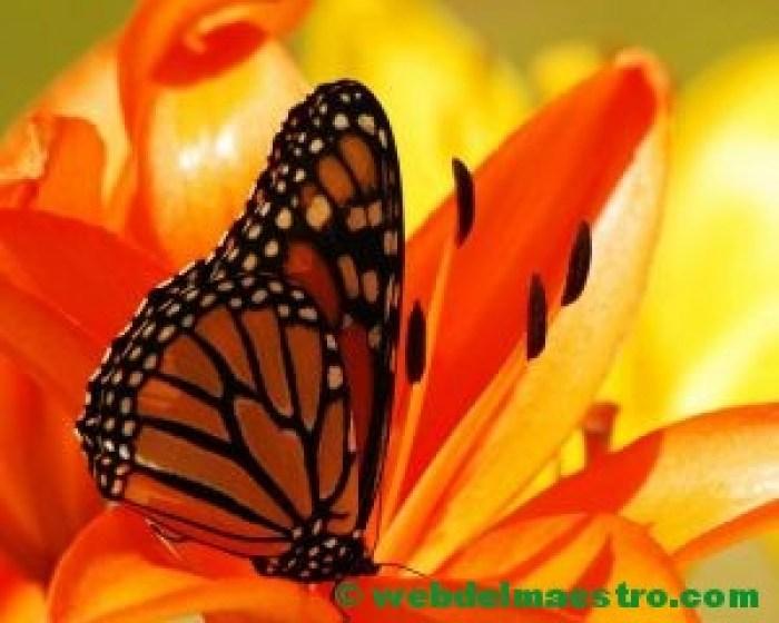 Color naranja--
