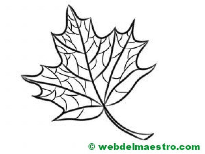 Hojas de otoño dibujo