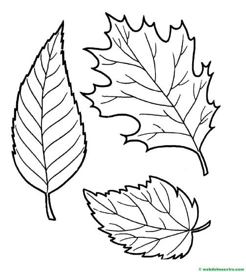 hojas otoño colorear--