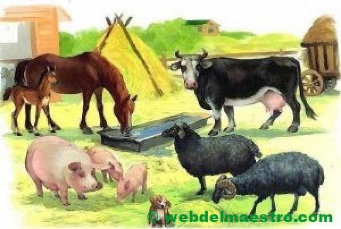 Granja con animales mamíferos