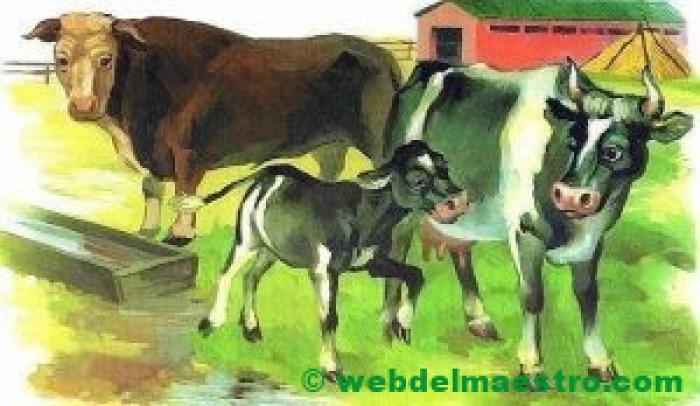 Toro, vaca y ternero