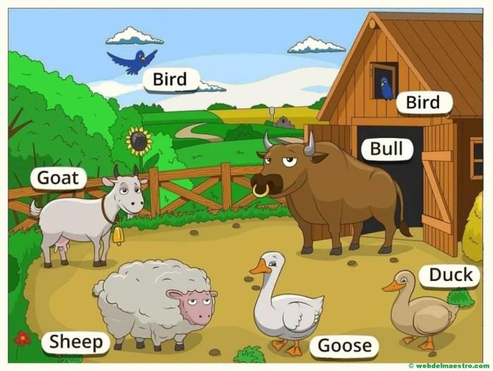 animales de la granja en ingles-II