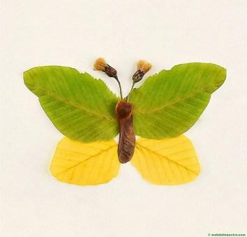 mariposa-