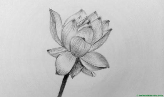 dibujo a lápiz de flor de loto