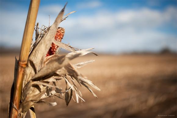Missed Harvest